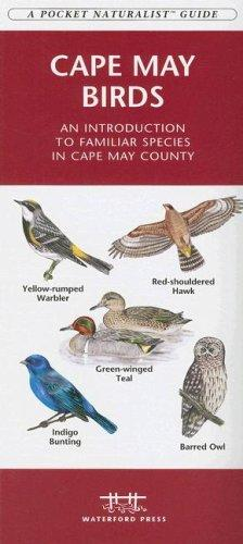 Cape May Birds by James Kavanagh